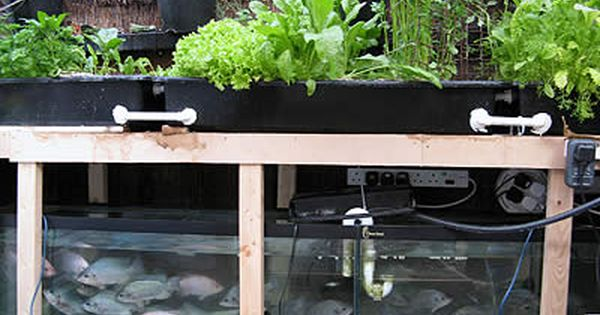Do It Yourself Home Design: Do It Yourself—Aquaponics: Aquaponics Is A System That
