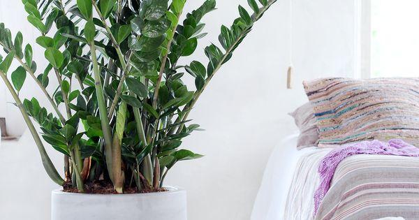 die richtige zimmerpflanze f r das schlafzimmer reinigen luft und pflanzen. Black Bedroom Furniture Sets. Home Design Ideas
