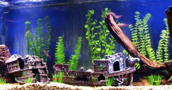 Freshwater Tanks Page 243 Fish Tank Themes Tropical Fish