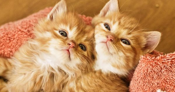 #cute cats funny kitties