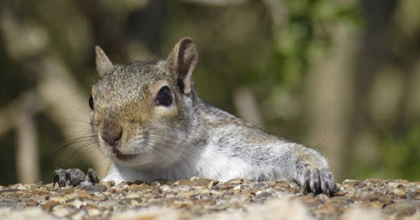 Keep Your Squirrels Out Of Your Garden