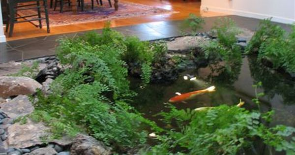 We Will Have An Indoor Koi Pond In The New House Would
