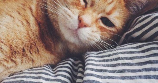 Cat - cool image