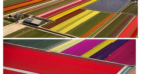 Dutch Tulip Fields, Holland. Could you ever imagine something more beautiful? Fields