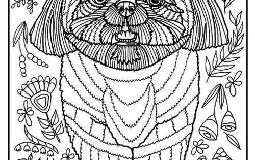 Free printable Shih Tzu coloring page available for