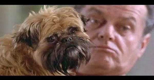 These Animals Provide Great Supporting Roles In Major Motion Pictures Brussels Griffon Dogs Griffon Dog