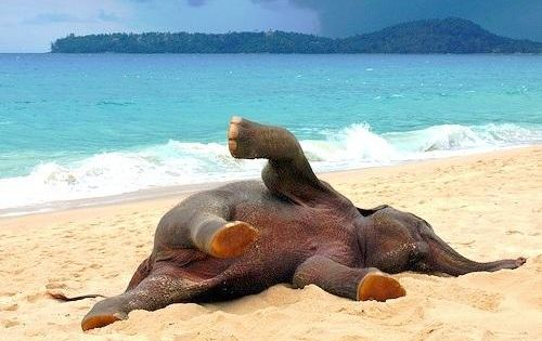 Baby Elephant Playing In The Beach For The First Time SO CUTE
