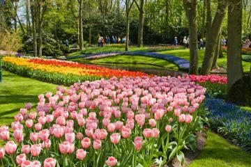 1edba73633beca4ab16871dc5b8d1a64 - Tours From Amsterdam To Keukenhof Gardens