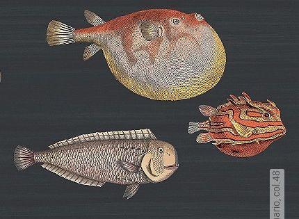 Tapete Fisch Google Suche Tapeten Fische