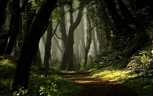 Enchanted Woods- Cascade Head, upper trail, near Lincoln City, OR USA