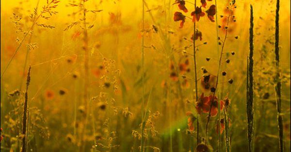 Wildflower Sunset, Burgundy, France. Beautiful photo.
