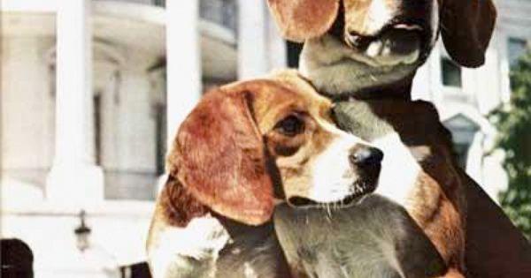 Lbj S Dogs Beagle Puppy Dog Behavior Beagle Dog