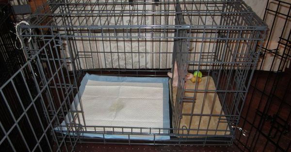 puppy apartment potty training accessories pets