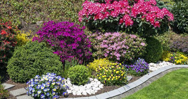Cu les son los mejores arbustos para plantar en el jard n for Arbustos para jardin