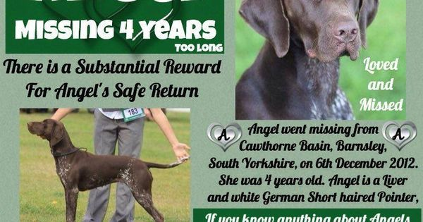 Pin By Stolen And Missing Pets Allian On Missing Dogs Losing A Dog Short Haired Pointer Cat Uk