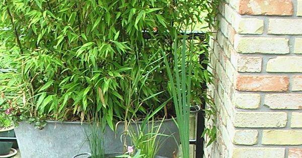 quelques id es d 39 am nagement d co jardin base de bassine zinc galva recycl es en vente en. Black Bedroom Furniture Sets. Home Design Ideas