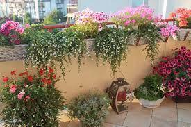 Znalezione Obrazy Dla Zapytania Balkon W Bloku Kwiaty Small Balcony Garden Plants Balcony Garden