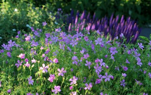 Pflegeleichter Garten Ohne Rasen Fur Chronisch Kranke Pflegeleichter Garten Garten Bepflanzen Garten