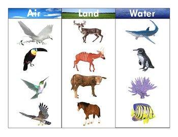 Pin By Ivana Truskova On Zwierzeta Water Animals Animals Animal Worksheets