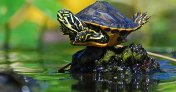 "baby turtles - Google Search ""i believe i can fly"""