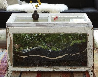 Diy Terrarium Coffee Table Close Up For The Home Pinterest Diy Terrarium Terraria And Coffee
