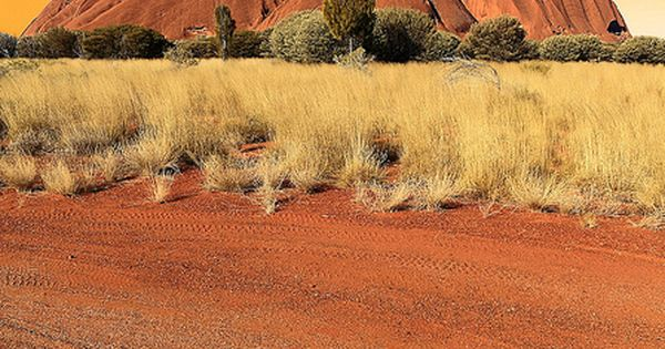 Ayers Rock or Uluru in the red center of Australia. It is