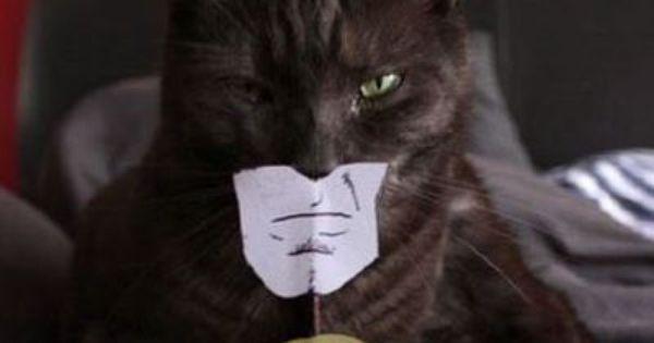 #animal cat batman fun blackcat