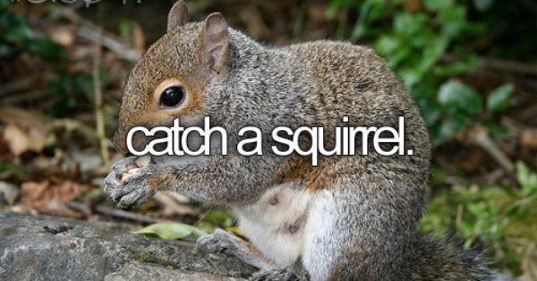 Squirrels Get Rid Of Squirrels Animal Facts Perfect Bucket List