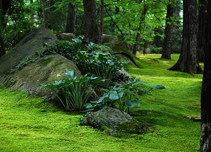 hostas on stone hill in moss lawn moss gardens pinterest moss lawn and lawn. Black Bedroom Furniture Sets. Home Design Ideas