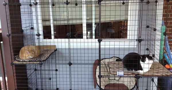 How to build your own catio from Cat and Caboodle ...