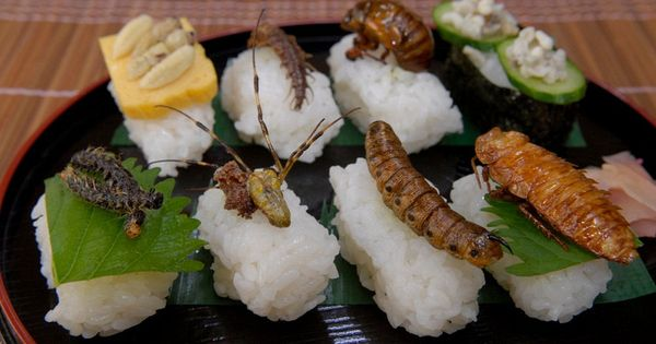 A selection of insect sushi from front left to back right for Cocinar insectos