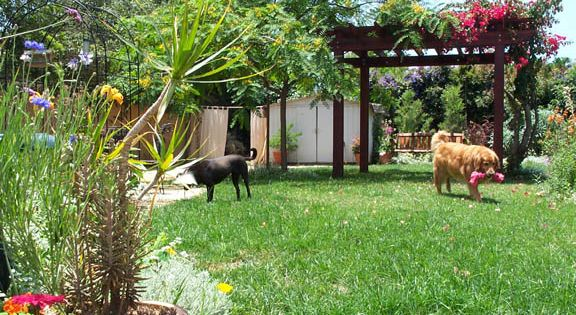 Landscaping ideas for small backyards with pergola and for Garden designs for dogs