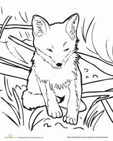 Baby Fox Worksheet Education Com Fox Coloring Page Horse Coloring Pages Coloring Pages