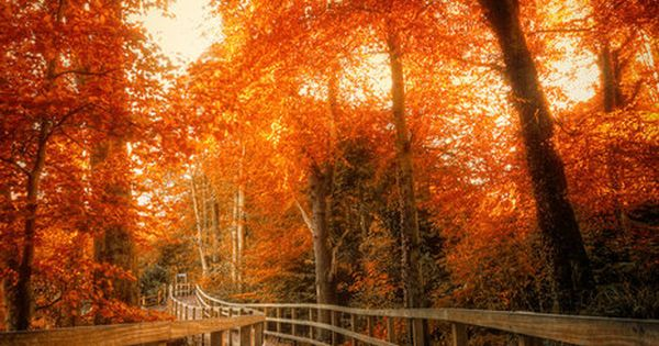 Beautiful Fall picture. Reminds me of going for walks :)