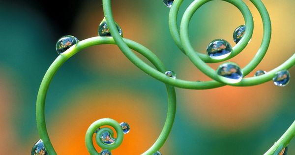 My Opera Is Now Closed Opera Spirals In Nature Dew Drops Passion Flower