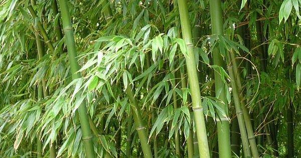 Bambus dibujo y pintura pinterest bamb espacios y for Color bambu pintura