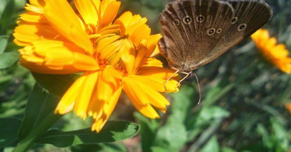 Photos Framboises Kto Zapyla Moje Kwiatki