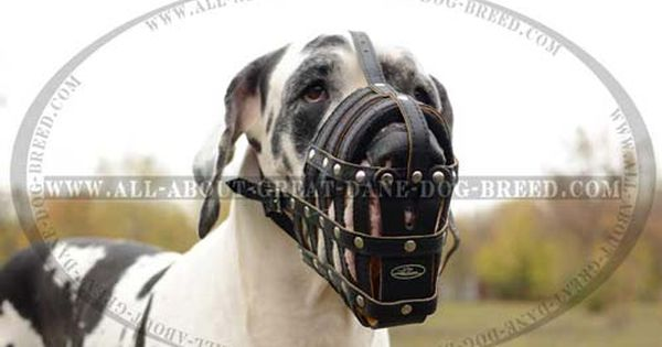 This Dog Muzzle With Perfect Air Flow Serves For Dog