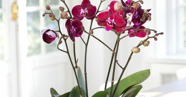 les fleurs d int rieur les orchid es en 40 images orchid es violettes et jolies. Black Bedroom Furniture Sets. Home Design Ideas
