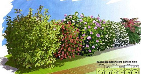 4 saisons 1 cornouiller fleurs f v mars caduc fruits rouges comestibles c moy 2. Black Bedroom Furniture Sets. Home Design Ideas