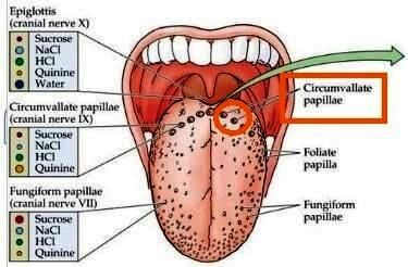 Tongue papillae treatment, Inflammation of tongue papillae. Tongue papillae inflammation treatment.