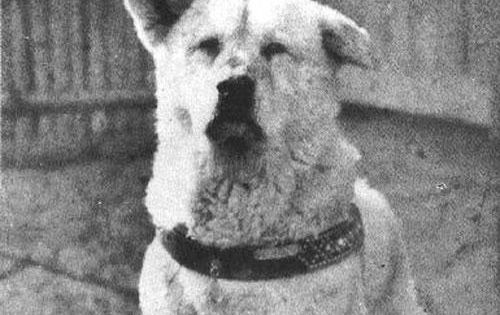 Hachiko 1 10 of the bravest dogs in history