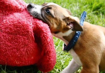 How To Train A Puppy To Stop Play Biting Labrador Honden Bruine Labrador