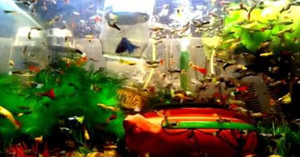 My Fish Collection Edited Video 001 I Created This Video With The Youtube Video Editor Http Www Youtube Com Ed Neon Tetra Aquariums For Sale Tank Wallpaper