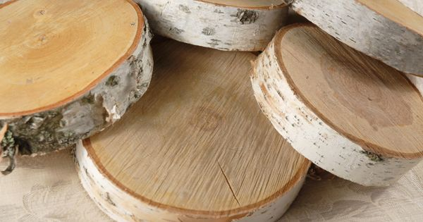 birch tree slices for food display