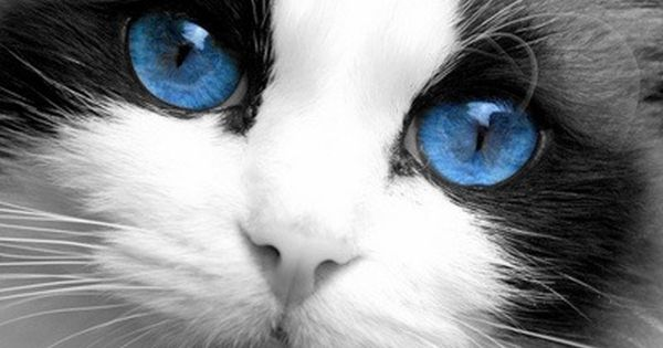 beautiful blue Baby Cats cute cats| http://babycutelittlecats.blogspot.com