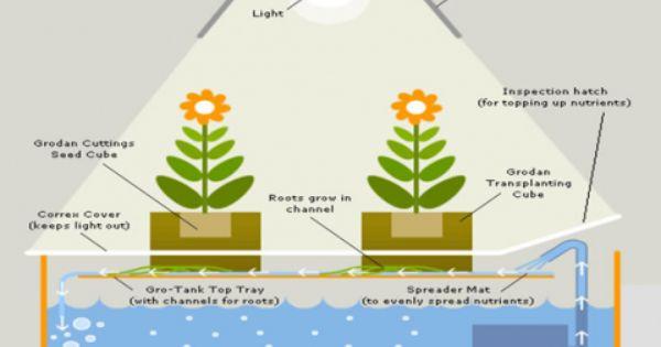 How to grow marijuana indoors for dummies tutorial a for Indoor gardening for dummies