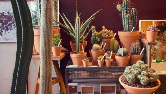 30 ideas para decorar con cactus y terrarios plantas y for Ideas para decorar macetas