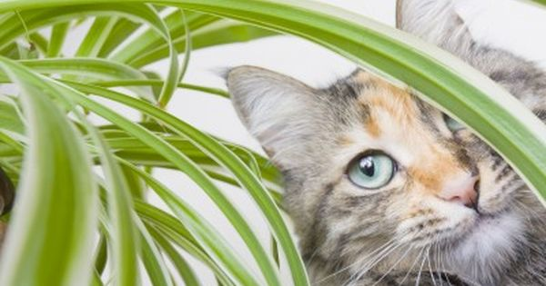 6 Stylish Houseplants That Are Safe For Cats And Dogs Plants Safe House Plants Cat Safe Plants
