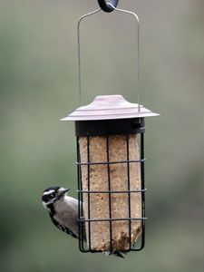 Suet Cylinder Feeder Picture Wild Birds Unlimited Feeder Suet Feeder